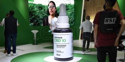 Cambio de paradigma: el cannabis medicinal puede proteger las neuronas
